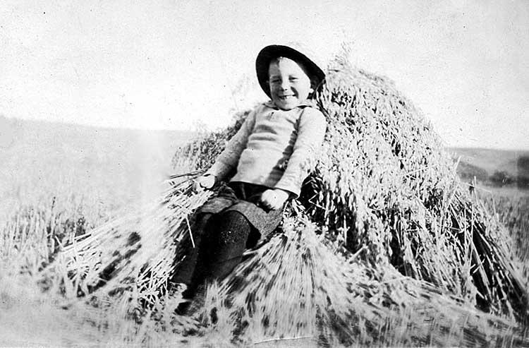harry in oat field