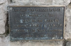 19 D P Evans Tree Plaque