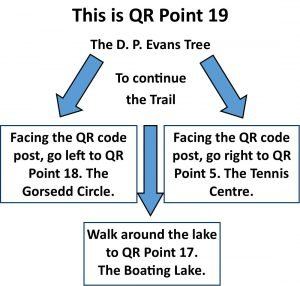 QR Point 19 D P Evans Tree